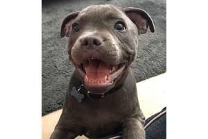 Адресник для собаки, Адресник косточка