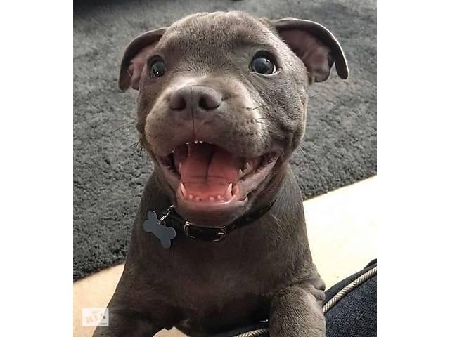 Адресник для собаки, Адресник косточка- объявление о продаже  в Киеве