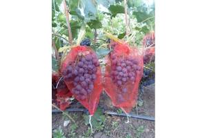 Мешочки для защиты винограда от ос и птиц