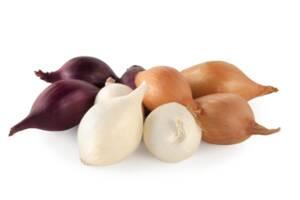 Озимый лук севок BROER BV /Top Onions (Нидерланды). Опт, мелкий опт