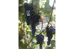 Продам технические сорта винограда