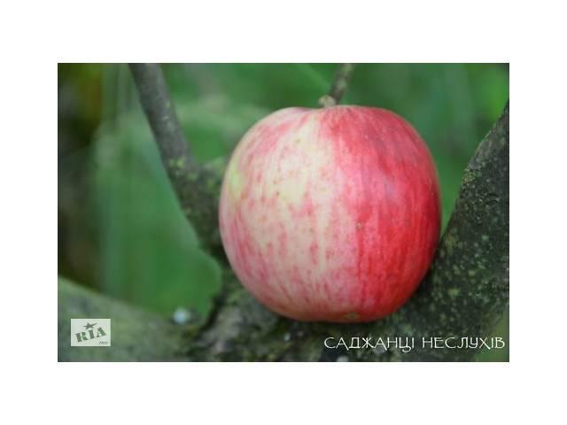 Саженцы яблонь 70 сортов, саженцы яблони