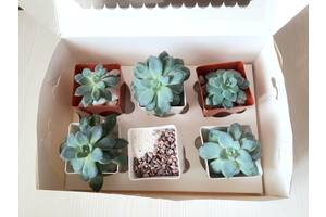 Суккулент бокс, набор живых растений и декора как подарок
