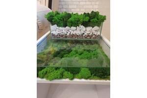 Топіарій, мох в кашпо, декор, стабілізованій мох