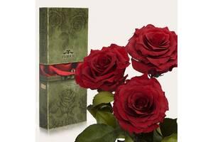 Три долгосвежих троянди Червоний Гранат 5 карат на короткому стеблі
