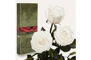 Три долгосвежих розы Белый Бриллиант 7 карат (короткий стебель)