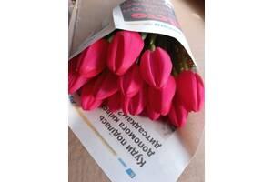 Тюльпан свежий срез к 8 марта ОПТ