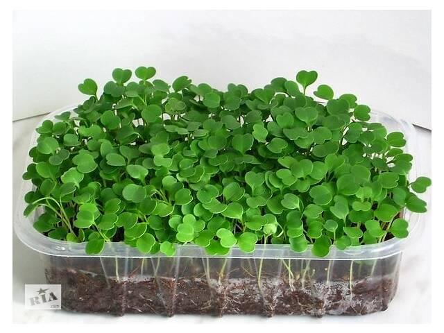 продам Выращиваем зелень на подоконнике. Готовый набор микрозелени бу в Днепре (Днепропетровск)
