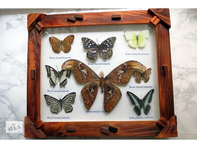 """продам Коллекционная картина под стеклом: """"8 бабочек"""" в деревянной рамке бу в Харькове"""