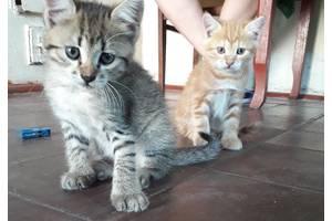 Кішки, коти, кошенята