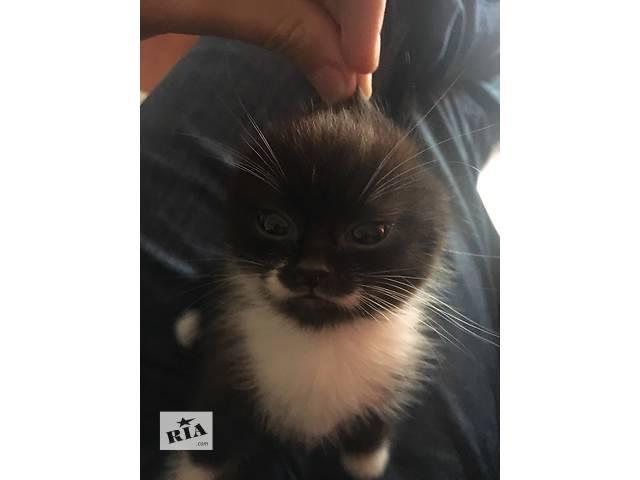 Замечательный котенок ищет заботливых хозяев- объявление о продаже  в Львове