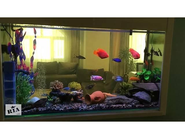 бу Чистка (уборка) аквариума гарантия качество в Киеве