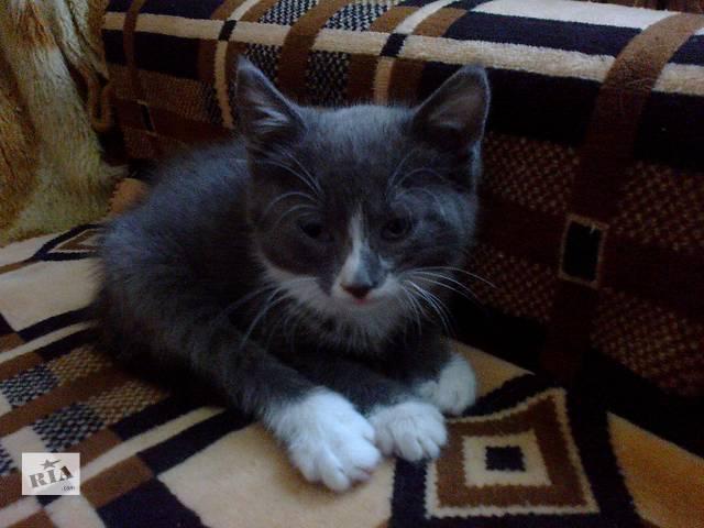 бу Дарим котёнка в Николаеве