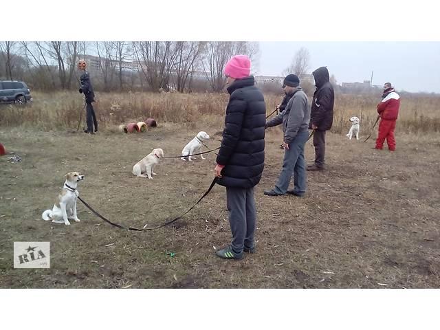 бу Дрессировка собак в Киеве