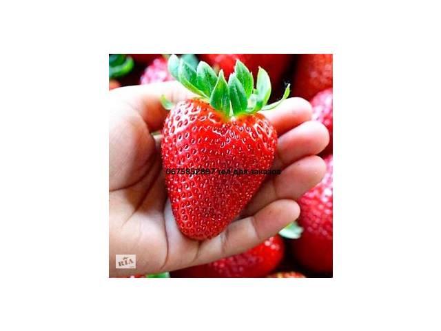 Клубника Гигантелика: купить домашнюю ягодницу сорта Гигантелла ... | 480x640