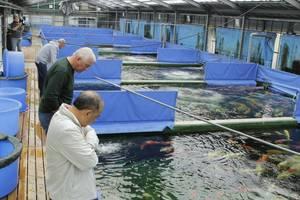 Прудовые рыбы