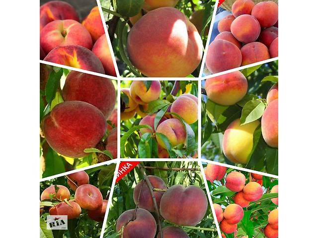 купить бу Саженцы элитных сортов плодово ягодных более 1000 товаров питомник. в Бахмуте (Артемовск)