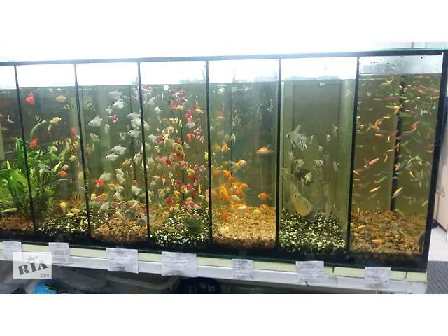 бу Великий асортимент акваріумних рибок в Запоріжжі