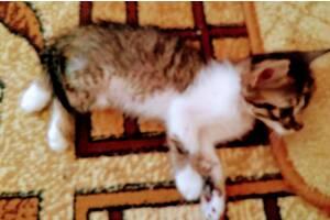 Безкоштовно привезу рудого кошеня в дар в будь-який район р. Херсона