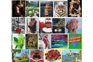 Картина по номерам Тигри Цветы квіти букет Кот Тигр Дикая кошка Красный шарф