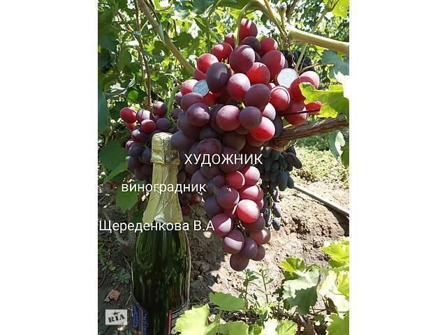 продам Саженцы и черенки винограда новейших сортов бу в Днепрорудном