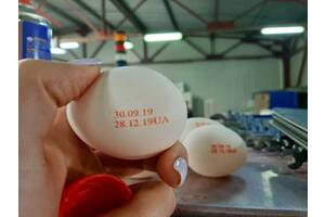 Яйцесортировочное і пакувальне обладнання