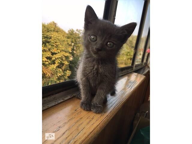Миле кошеня в добрі руки- объявление о продаже  в Тернополе