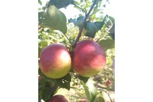 Обрізка формування, висадка саду фруктових дерев