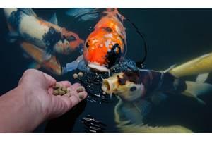 jpd,coppens,корм для кои,японские карпы кои кормление,карпы кои цена,рыбки для пруда,садовый водоем,