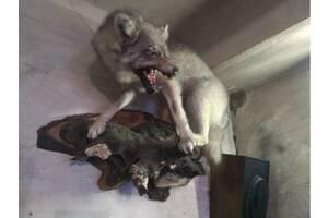 Продам Волка