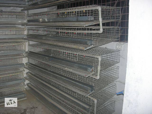 продам Клетка для перепелов-несушек на 80 голов, с яйцесборником, поением, кормушкой бу в Бахмуте (Артемовск)