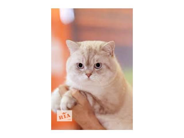 продам Кот для вязки. бу в Донецке