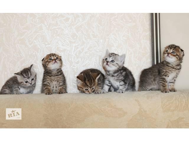 Котята для Вас- объявление о продаже  в Харькове