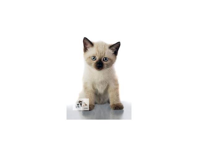 продам котик тестовый бу в Теребовле