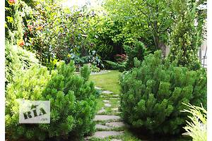 Помощь по саду, огороду