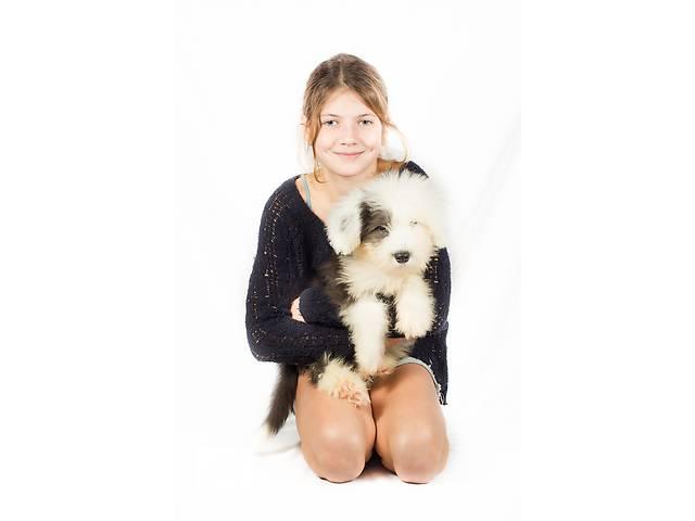 купить бу Мальчик бобтейл в качестве домашнего любимца! в Киеве