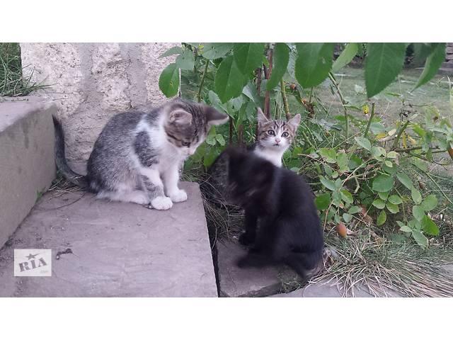 продам Милые пушистики: тигренок мальчик, тигренок девочка и черная пушистая девочка., бу в Тернополе
