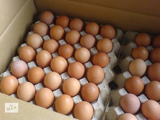бу Недорого куриные яйца категории c-0 и с-1 в Киеве