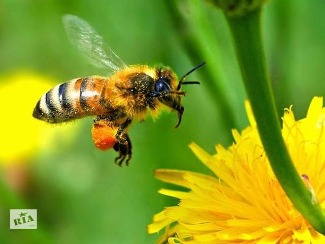 купить бу Бджолопакети карпатської бджоли, доставка в Києві