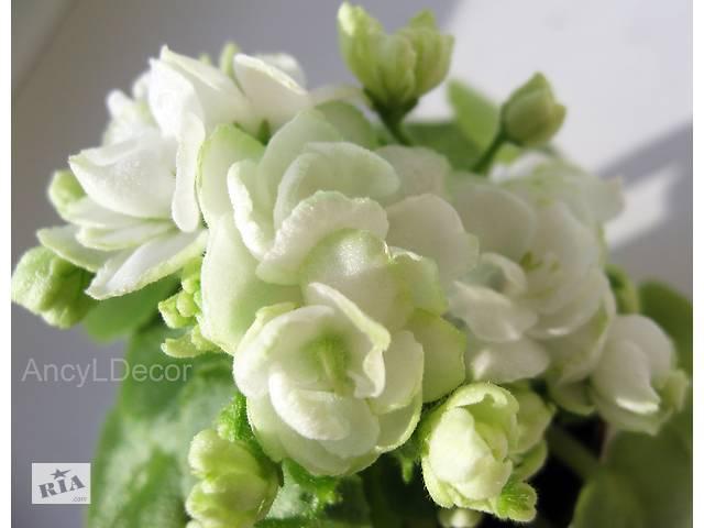купить бу Фиалки мини Киев сортовые, детка Alys Blizzard Bunny - цветы-розочки, мини в Киеве