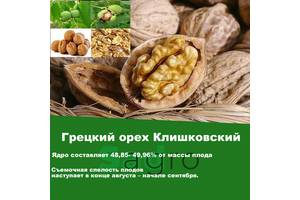 Саджанці горіха