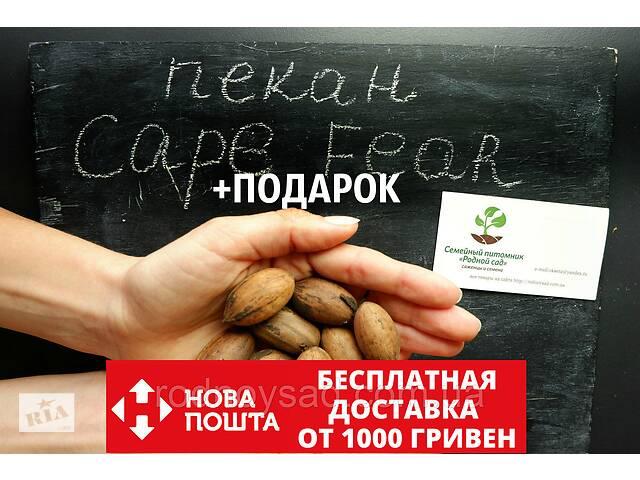 "Пекан (10 штук) сорта ""Cape Fear"" (ранний) семена орех кария для выращивания саженцев (насіння на саджанці)- объявление о продаже  в Андреевке"