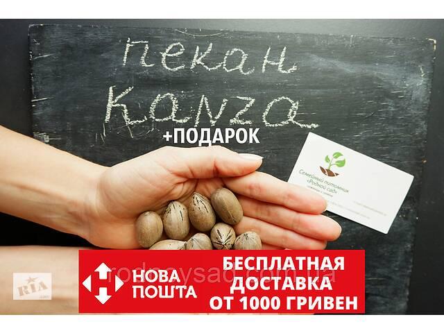 """купить бу Пекан (10 штук) сорта """"Kanza""""(поздний) семена орех кария для саженцев (насіння на саджанці)Carya illinoinensis в Андреевке"""
