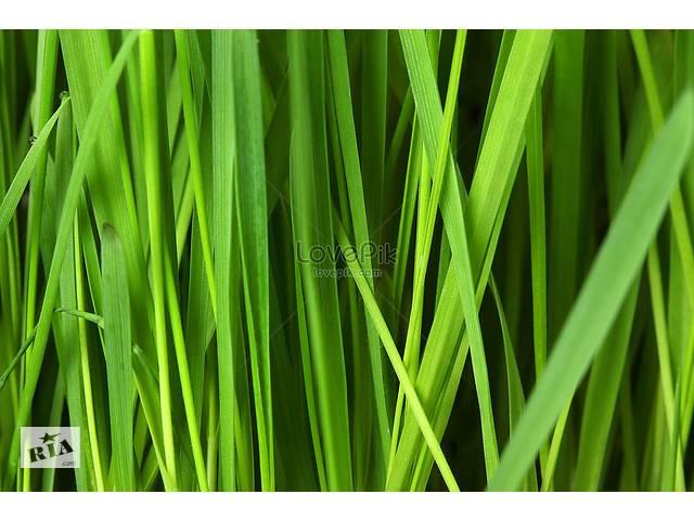 продам продам свежоскошенную,сочную газонную траву.  бу в Броварах