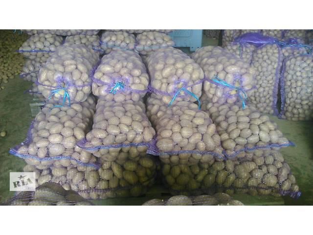 купить бу Продаем картофель оптом из Беларуси в Донецке