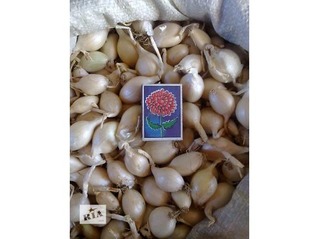 купить бу Продам лук кущевка(шалот)белый. в Токмаке