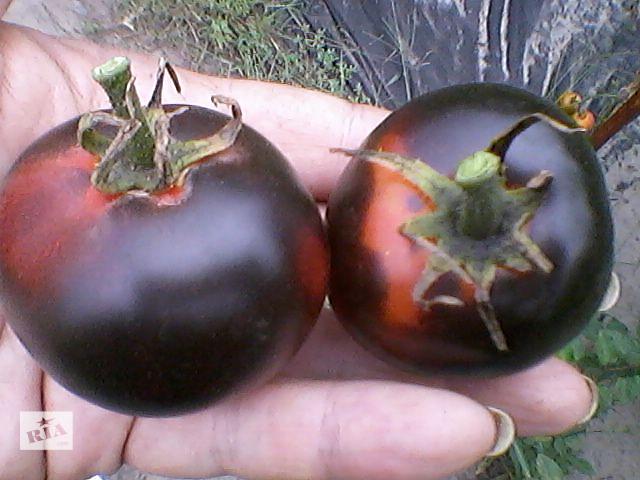 Продам семена сортовых томатов (полосатые, 2-цветные, синие, белые, зеленые, шоколадные, красные, розовые и др.- объявление о продаже  в Харькове