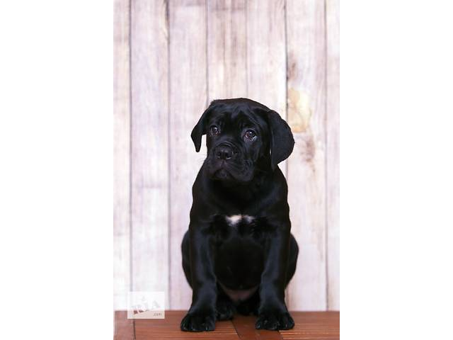 продам Продам щенков бу в Одессе