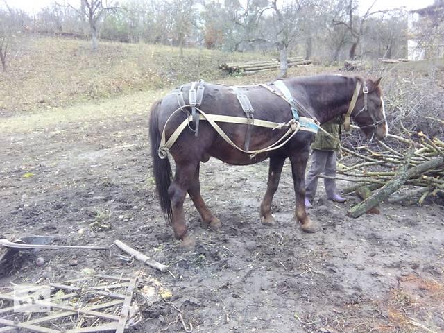 купить бу Продам большого , спокойного , рабочего коня в Остроге