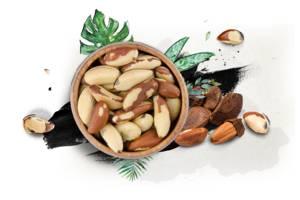 Бразильський горіх, оптом і в роздріб